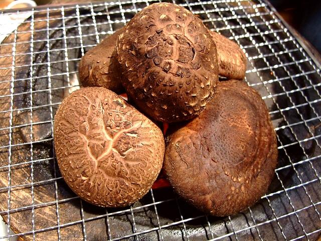 やっぱり穴場!採れたての椎茸は絶品です! 猪名川町 「仲しい茸園」