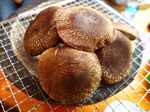 大自然の中で美味しい椎茸とBBQが楽しめます!  猪名川町  「仲しい茸園」