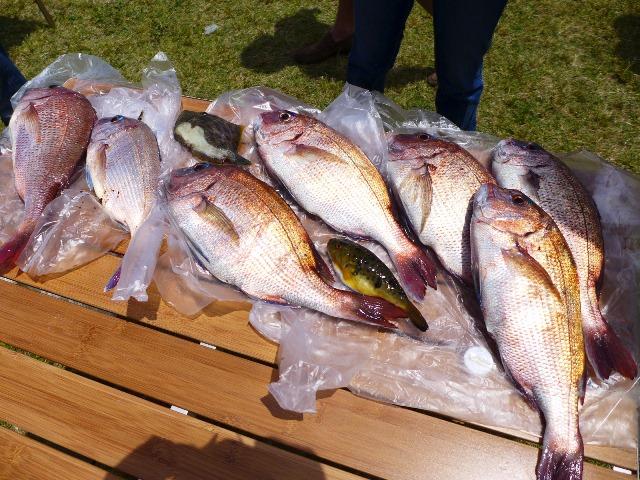 2014春  恒例の超贅沢BBQ!肉だけでなく魚も満喫!  @淀川河川敷公園